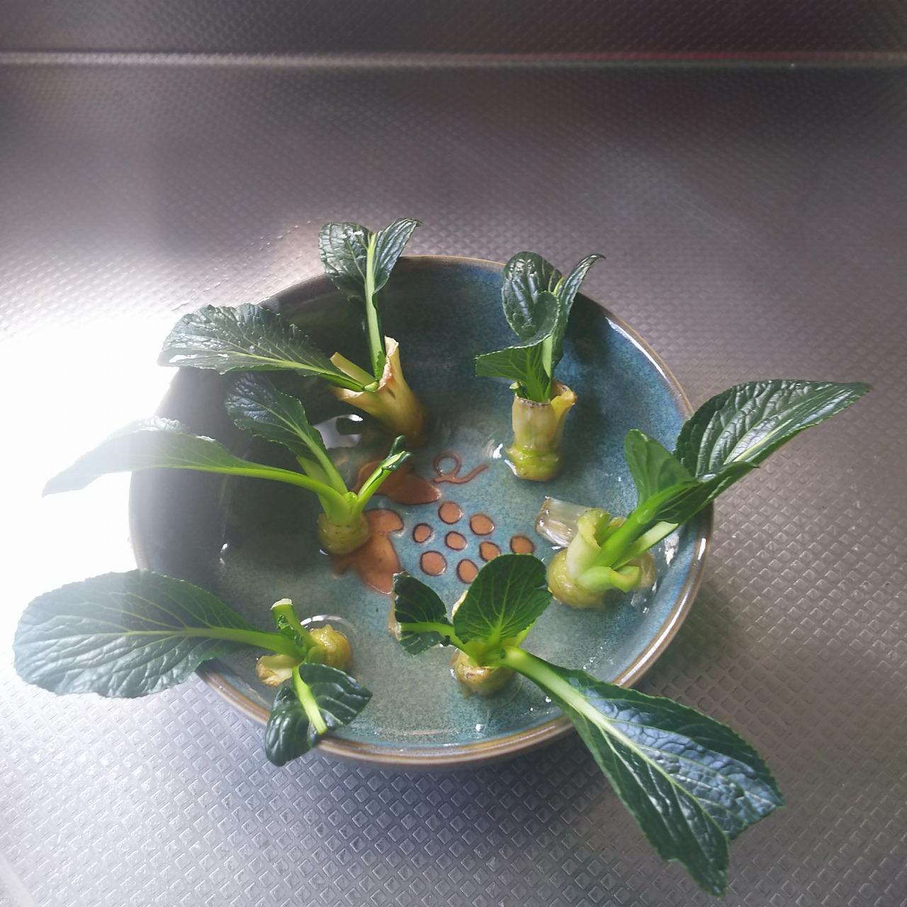 2週間後の小松菜